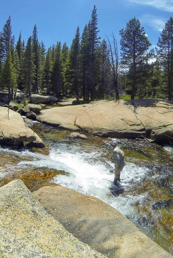 Yosemite National Park Fly Fisher